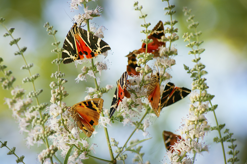 valley-of-butterflies-2